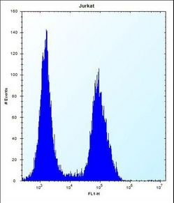 PRSS7 Antibody (C-term E979) flow cytometry of Jurkat cells (right histogram) compared to a negative control cell (left histogram). FITC-conjugated donkey-anti-rabbit secondary antibodies were used for the analysis.