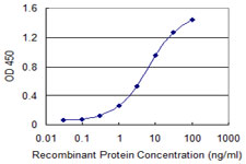 TNFRSF21 / DR6 Antibody - Detection limit for recombinant GST tagged TNFRSF21 is 0.1 ng/ml as a capture antibody.