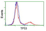 HEK293T cells transfected with either overexpress plasmid (Red) or empty vector control plasmid (Blue) were immunostained by anti-TP53 antibody, and then analyzed by flow cytometry.