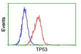 Flow cytometry of HeLa cells, using anti-TP53 antibody (Red), compared to a nonspecific negative control antibody (Blue).