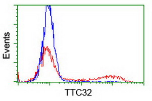 TTC32 Antibody - HEK293T cells transfected with either overexpress plasmid (Red) or empty vector control plasmid (Blue) were immunostained by anti-TTC32 antibody, and then analyzed by flow cytometry.