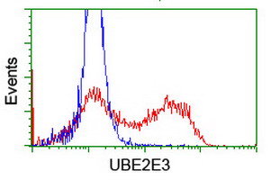HEK293T cells transfected with either overexpress plasmid (Red) or empty vector control plasmid (Blue) were immunostained by anti-UBE2E3 antibody, and then analyzed by flow cytometry.
