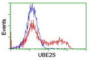 HEK293T cells transfected with either overexpress plasmid (Red) or empty vector control plasmid (Blue) were immunostained by anti-UBE2S antibody, and then analyzed by flow cytometry.