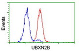 Flow cytometry of HeLa cells, using anti-UBXN2B antibody (Red), compared to a nonspecific negative control antibody (Blue).