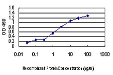 ULK1 Antibody - Detection limit for recombinant GST tagged ULK1 is approximately 0.03 ng/ml as a capture antibody.