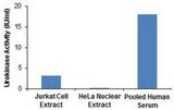 Urokinase activities of Jurkat cell extract [10 µl], HeLa nuclear extract [10 µl] and Pooled human serum (10 µl).