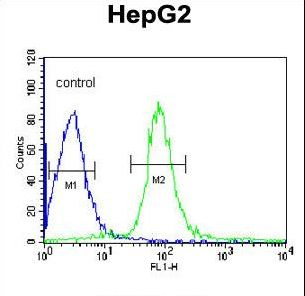 VHL / Von Hippel Lindau Antibody - VHL Antibody flow cytometry of HepG2 cells (right histogram) compared to a negative control cell (left histogram). FITC-conjugated goat-anti-rabbit secondary antibodies were used for the analysis.