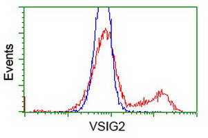 VSIG2 Antibody - HEK293T cells transfected with either overexpress plasmid (Red) or empty vector control plasmid (Blue) were immunostained by anti-VSIG2 antibody, and then analyzed by flow cytometry.
