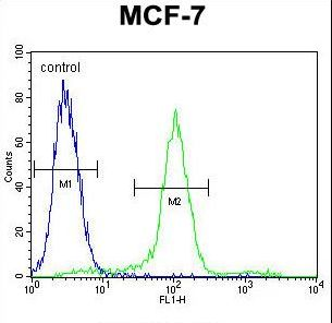 WT1 Antibody (Center E361) flow cytometry of MCF-7 cells (right histogram) compared to a negative control cell (left histogram). FITC-conjugated goat-anti-rabbit secondary antibodies were used for the analysis.