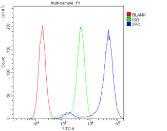 XPO1 / CRM1 Antibody - Flow Cytometry analysis of U87 cells using anti-CRM1 antibody. Overlay histogram showing U87 cells stained with anti-CRM1 antibody (Blue line). The cells were blocked with 10% normal goat serum. And then incubated with rabbit anti-CRM1 Antibody (1µg/10E6 cells) for 30 min at 20°C. DyLight®488 conjugated goat anti-rabbit IgG (5-10µg/10E6 cells) was used as secondary antibody for 30 minutes at 20°C. Isotype control antibody (Green line) was rabbit IgG (1µg/10E6 cells) used under the same conditions. Unlabelled sample (Red line) was also used as a control.