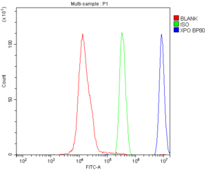 XPO1 / CRM1 Antibody - Flow Cytometry analysis of SiHa cells using anti-CRM1 antibody. Overlay histogram showing SiHa cells stained with anti-CRM1 antibody (Blue line). The cells were blocked with 10% normal goat serum. And then incubated with rabbit anti-CRM1 Antibody (1µg/10E6 cells) for 30 min at 20°C. DyLight®488 conjugated goat anti-rabbit IgG (5-10µg/10E6 cells) was used as secondary antibody for 30 minutes at 20°C. Isotype control antibody (Green line) was rabbit IgG (1µg/10E6 cells) used under the same conditions. Unlabelled sample (Red line) was also used as a control.