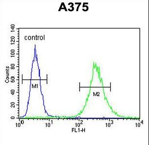 ZCCHC17 Antibody flow cytometry of A375 cells (right histogram) compared to a negative control cell (left histogram). FITC-conjugated goat-anti-rabbit secondary antibodies were used for the analysis.