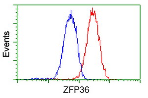 ZFP36 / Tristetraprolin Antibody - Flow cytometry of Jurkat cells, using anti-ZFP36 antibody (Red), compared to a nonspecific negative control antibody (Blue).